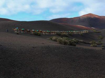 Dromedare im Timanfaya National Park